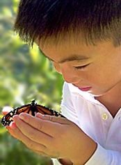 Monarch butterflies at Aquinas Montessori School